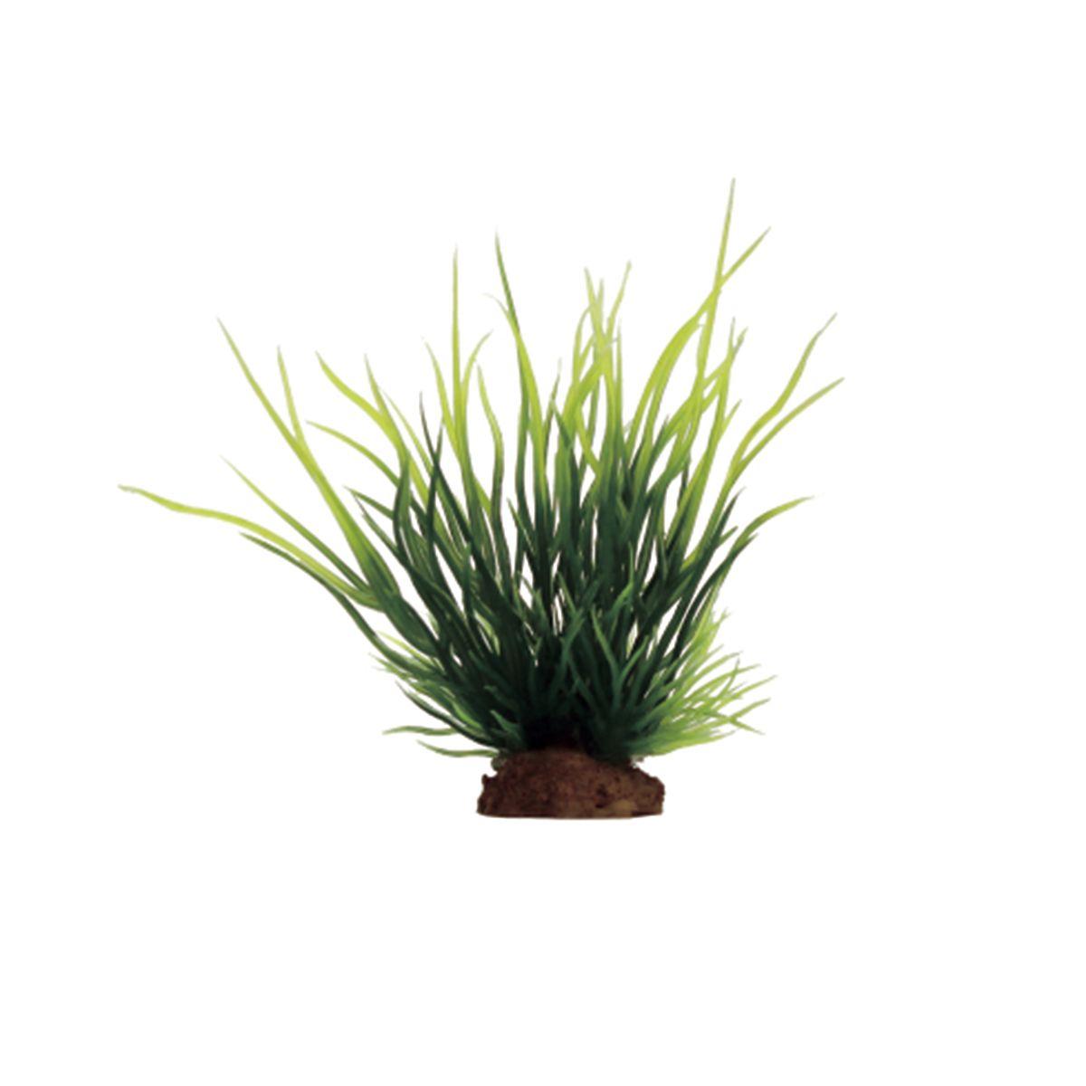 Растение для аквариума ArtUniq Лилеопсис, высота 10 см, 6 штART-1170518Растение для аквариума ArtUniq Лилеопсис, высота 10 см, 6 шт