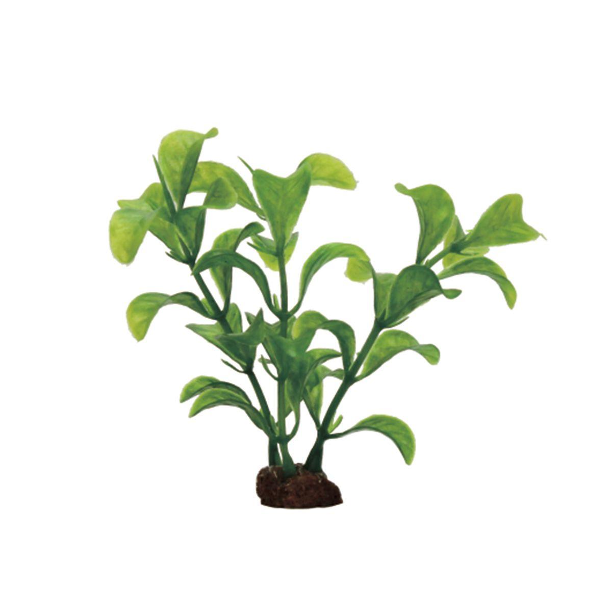 Растение для аквариума ArtUniq Людвигия зеленая, высота 10 см, 6 штART-1170521Растение для аквариума ArtUniq Людвигия зеленая, высота 10 см, 6 шт