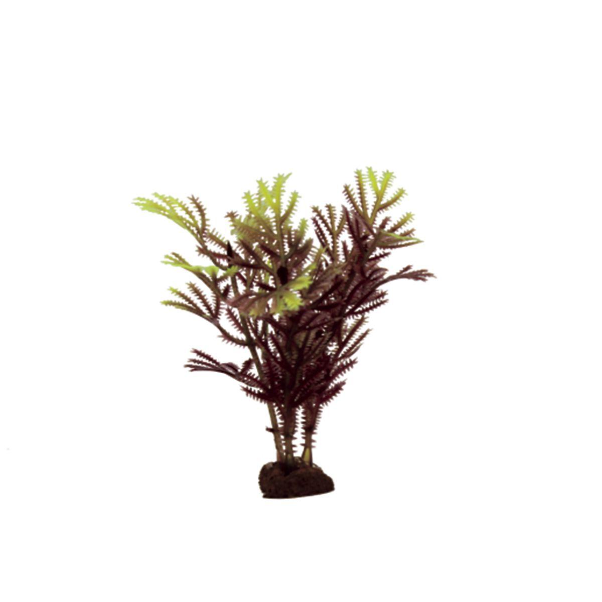 Растение для аквариума ArtUniq Хоттиния коричнево-желтая, высота 10 см, 6 штART-1170524Растение для аквариума ArtUniq Хоттиния коричнево-желтая, высота 10 см, 6 шт