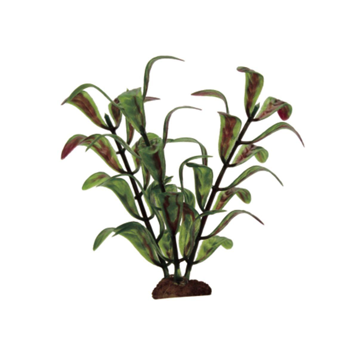 Растение для аквариума ArtUniq Гигрофила индийская, высота 10 см, 6 штART-1170527Растение для аквариума ArtUniq Гигрофила индийская, высота 10 см, 6 шт