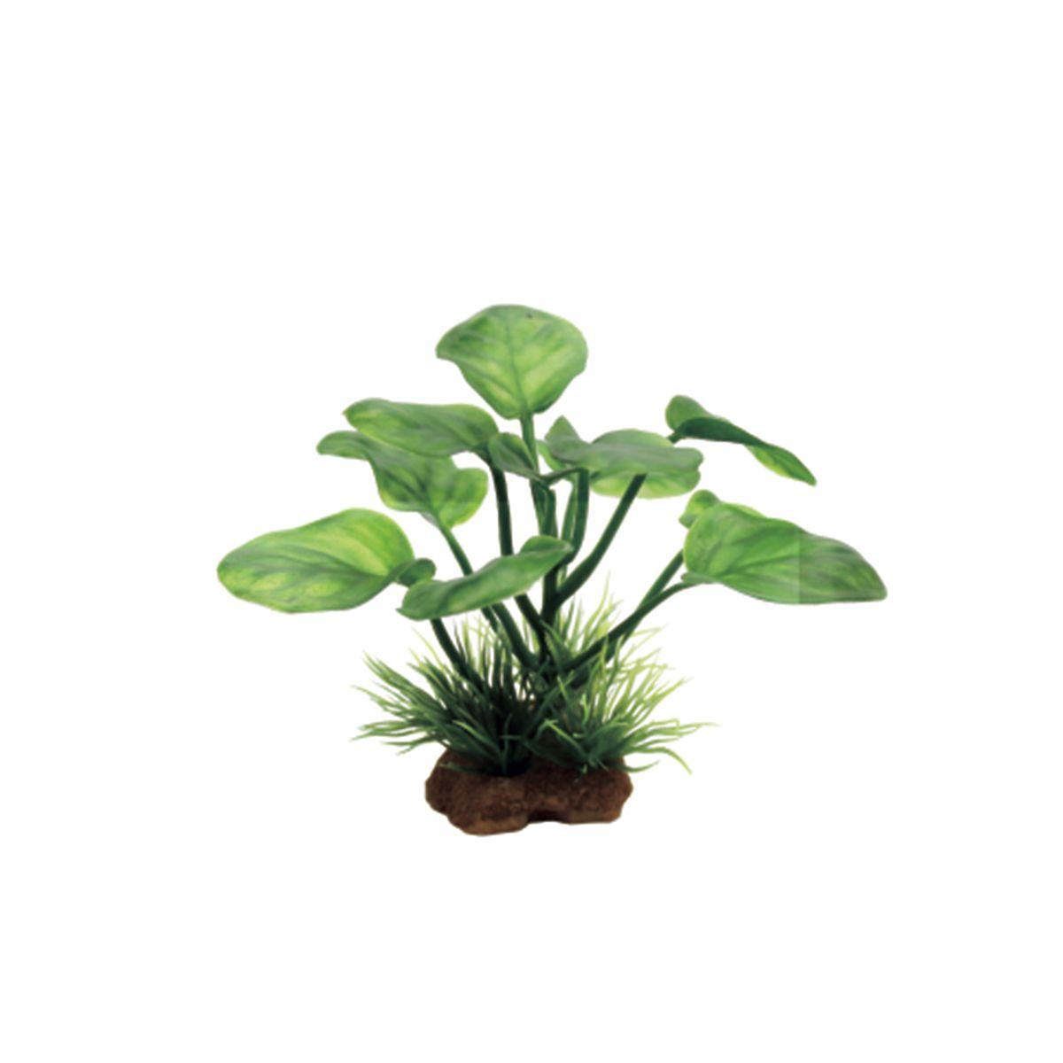 Растение для аквариума ArtUniq Анубиас, высота 10 см, 6 штART-1170536Растение для аквариума ArtUniq Анубиас, высота 10 см, 6 шт