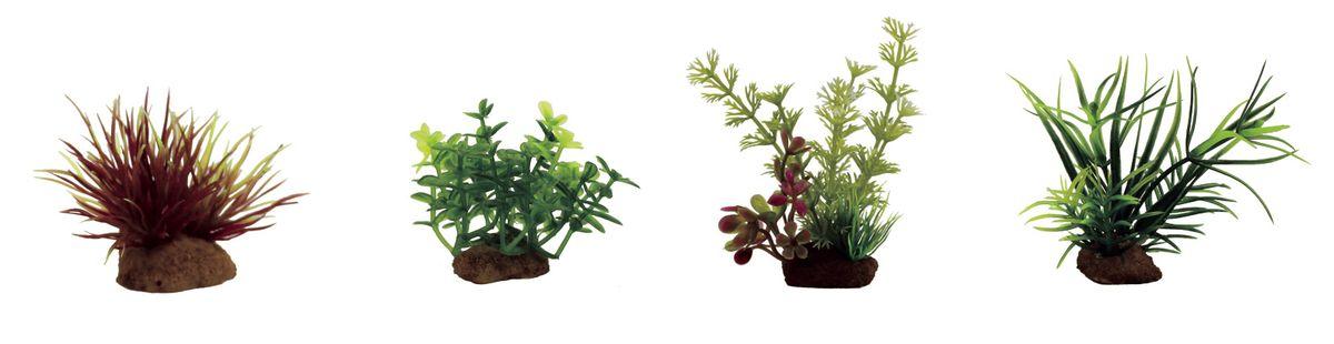 Растение для аквариума ArtUniq Лилеопсис красный, глоссостигма, амбулия, лагаросифон мадагаскарский, высота 7-10 см, 4 штART-1170605Растение для аквариума ArtUniq Лилеопсис красный, глоссостигма, амбулия, лагаросифон мадагаскарский, высота 7-10 см, 4 шт