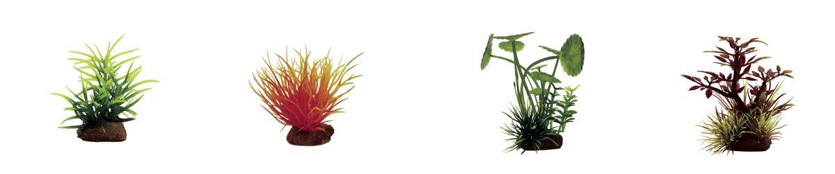 Растение для аквариума ArtUniq Погостеон, лилеопсис оранжевый, щитолистник, микрантемум красный, высота 7-10 см, 4 штART-1170607Растение для аквариума ArtUniq Погостеон, лилеопсис оранжевый, щитолистник, микрантемум красный, высота 7-10 см, 4 шт