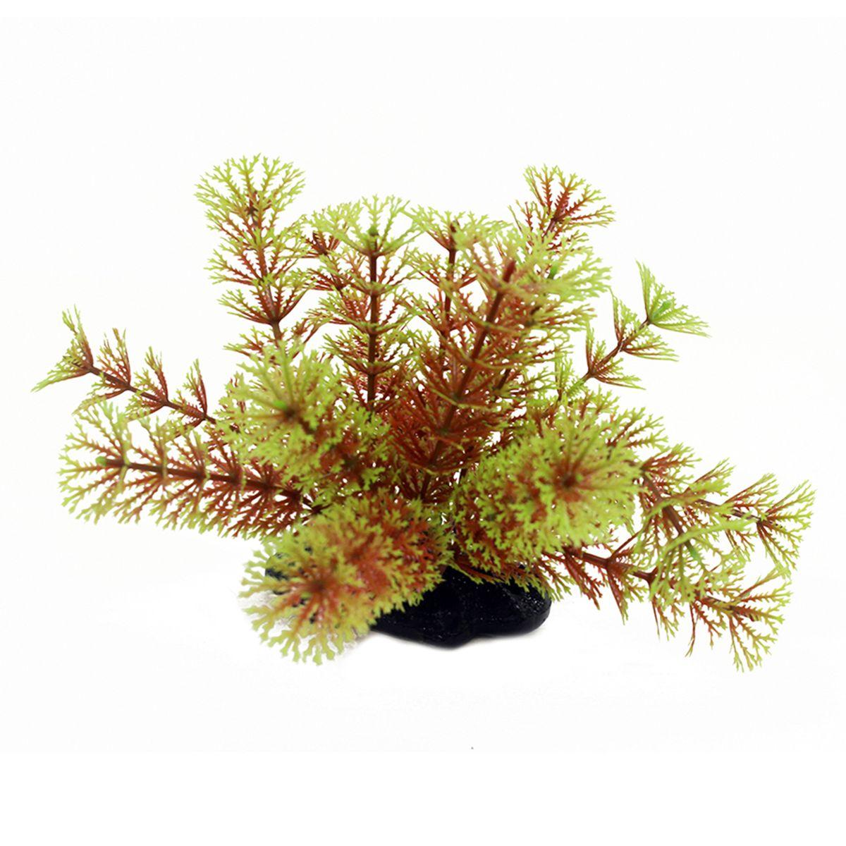 Растение для аквариума ArtUniq Кабомба красно-зеленая, высота 10-12 смART-1192103Растение для аквариума ArtUniq Кабомба красно-зеленая, высота 10-12 см