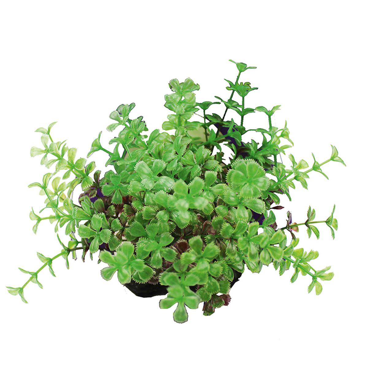Растение для аквариума ArtUniq Прозерпинака красно-зеленая, высота 10-12 смART-1192111Растение для аквариума ArtUniq Прозерпинака красно-зеленая, высота 10-12 см