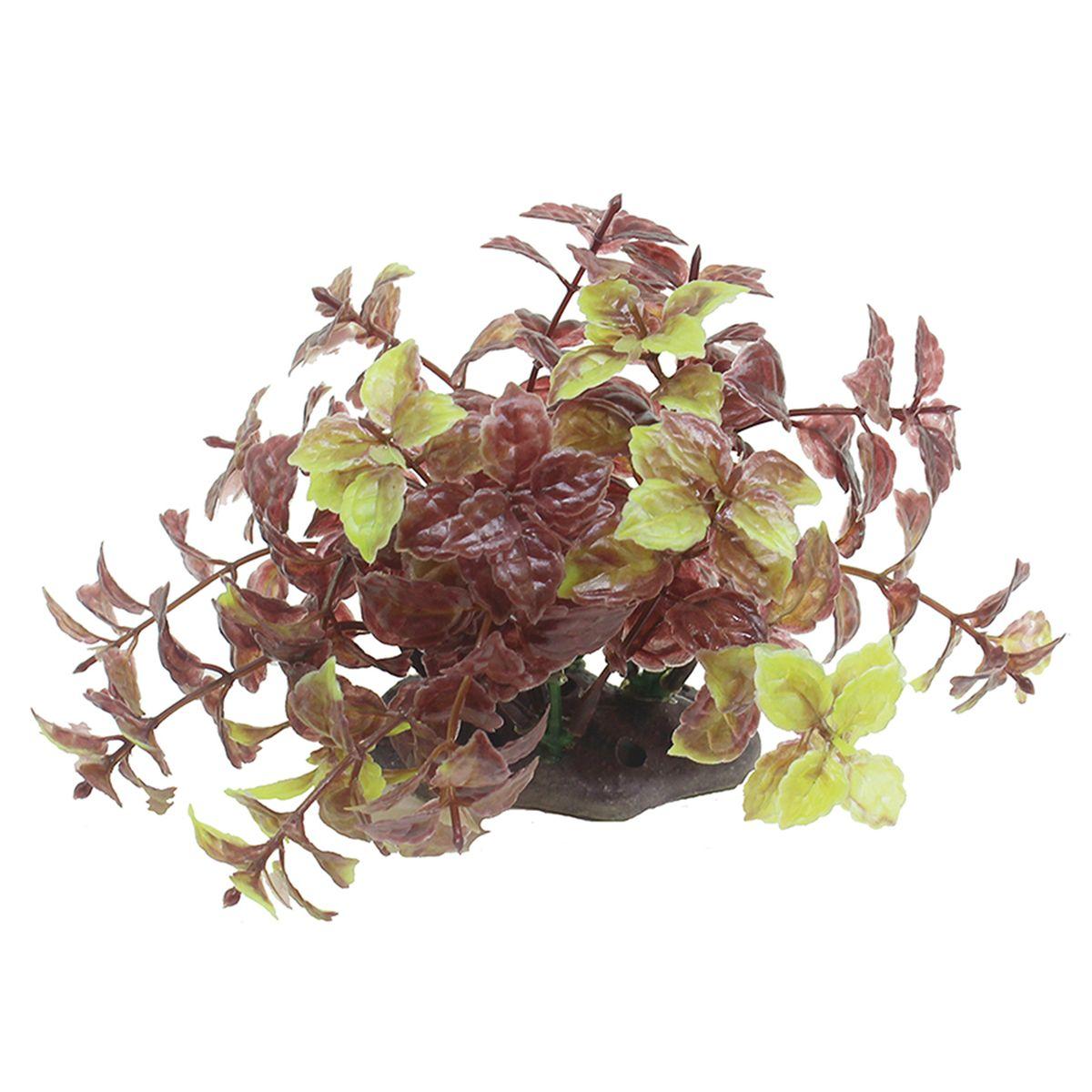 Растение для аквариума ArtUniq Хемиграфис, высота 10-12 смART-1192112Растение для аквариума ArtUniq Хемиграфис, высота 10-12 см