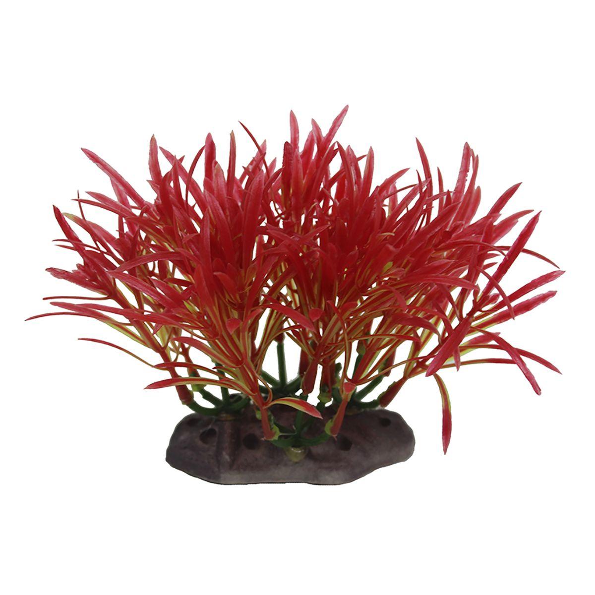 Растение для аквариума ArtUniq Аммания изящная, высота 10-12 смART-1192123Растение для аквариума ArtUniq Аммания изящная, высота 10-12 см