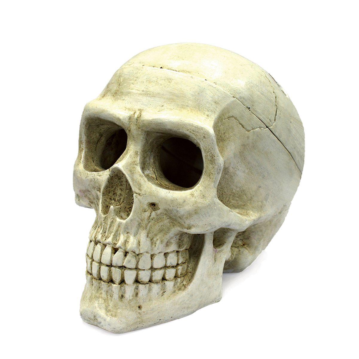 Декорация для аквариума ArtUniq Большой череп, 20 x 12,7 x 15,8 смART-2212120Декорация для аквариума ArtUniq Большой череп, 20 x 12,7 x 15,8 см