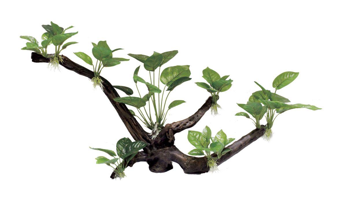 Декорация для аквариума ArtUniq Ветвистая коряга с анубиасом, 60,5 x 26 x 40 смART-3119202Декорация для аквариума ArtUniq Ветвистая коряга с анубиасом, 60,5 x 26 x 40 см