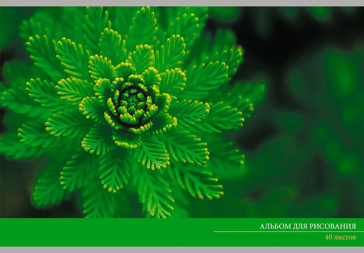 Канц-Эксмо Альбом для рисования Зеленый мир 40 листовАЛ401474Альбом для рисования 40 листов на скрепке. Обложка из мелованного картона с выборочным лаком. Бумага офсет 110г/м2.