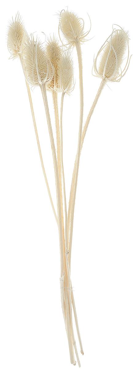 Украшение декоративное Lovemark Эхинопс, цвет: бежевый, 6 шт6025_бежевыйУкрашение декоративное Эхинопс - великолепный подарок себе и вашим близким. Этот очаровательный предмет интерьера будет приковывать взгляды ваших гостей. Изделия из соломки несут в себе энергию солнечных лучей. Несмотря на свой хрупкий вид, солома является прочным и долговечным материалом, а значит не помнется и не поломается со временем. Рекомендации по уходу: изделие должно находиться в сухом помещении.