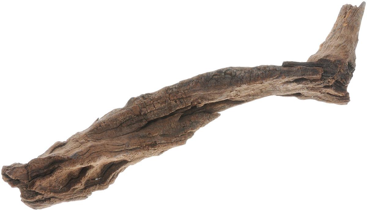 Декорация для аквариума UDeco Коряга китайская. Размер XSUDC10330Декорация UDeco Коряга китайская станет прекрасным украшением вашего аквариума. Изделие изготовлено из натурального дерева. Декорация будет служить превосходным укрытием для небольших рыб, мальков и креветок. Отлично подходит для кольчужных сомов. В аквариуме коряга может потемнеть и немного окрасить воду. Для утяжеления коряги и предотвращения окрашивания рекомендуется предварительно замочить её в воде на несколько дней. Вес декорации: 200-500 г. Размер декорации: 15-40 см. Возможны незначительные отклонения размера и веса от указанных.