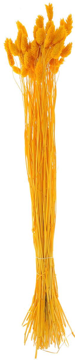 Украшение декоративное Lovemark Пучок. Фалярис, цвет: желтый, длина 77 см6009_желтыйКаждое время года по-своему прекрасно. Однако, как часто поздней осенью и долгой зимой нам не хватает тепла, ярких весенних красок, которые дарят цветы. Этот недостаток можно восполнить благодаря композициям из сухоцветов. Букет из сухих цветов способен сохранять свою красоту на протяжении всего года, а уход за ним минимален. Очень удобны сухоцветы и для использования их людьми с повышенной аллергической реакцией на пыльцу растений и различные резкие запахи. Подчеркните свой неповторимый вкус в интерьере с помощью нежной композиции из сухих цветов. Длина украшения: 77 см.
