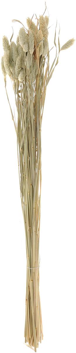 Украшение декоративное Lovemark Пучок. Фалярис, цвет: бежевый, длина 77 см6009_бежевыйКаждое время года по-своему прекрасно. Однако, как часто поздней осенью и долгой зимой нам не хватает тепла, ярких весенних красок, которые дарят цветы. Этот недостаток можно восполнить благодаря композициям из сухоцветов. Букет из сухих цветов способен сохранять свою красоту на протяжении всего года, а уход за ним минимален. Очень удобны сухоцветы и для использования их людьми с повышенной аллергической реакцией на пыльцу растений и различные резкие запахи. Подчеркните свой неповторимый вкус в интерьере с помощью нежной композиции из сухих цветов. Длина украшения: 77 см.