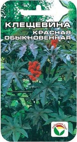 Семена Сибирский сад Клещевина красная. Обыкновенная, 5 штBP-00000229Это интересное высокорослое растение с крупными листьями можно смело назвать сибирской пальмой, достигающей за один год огромных размеров Декоративное растение из семейства Мальвовые высотой до 1,5-2 м. Ценится за крупные красивые листья темно-красной окраски. Теплолюбива, светолюбива и довольно засухоустойчива. Предпочитает участки с плодородной и хорошо обработанной почвой. Выращивается рассадным способом. Посев проводят в начале апреля в горшочки по 2-3 шт. Всходы появляются через 10-12 дней. Рассаду высаживают в открытый грунт в начале июня на расстоянии 50-60 см. Используется в оформлении участка. Для подкормки используют минеральные комплексные удобрения. Для ускорения процесса всхожести семян, оздоровления растений, улучшения завязываемости плодов рекомендуется пользоваться специально разработанными стимуляторами роста и развития растений.