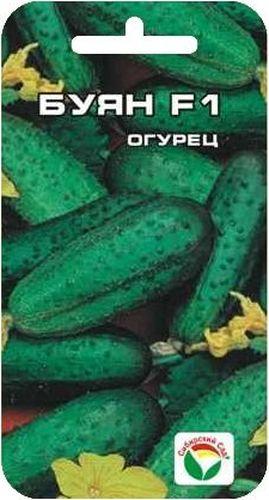 Семена Сибирский сад Огурец. Буян, 7 штBP-00000282Популярный скороспелый партенокарпический гибрид корнишонного типа с пучковым расположением завязей (в узлах формируется от 2 до 5-7 завязей). Зеленцы ярко-зеленые. с частым опушением, маленькие, длиной 8-11 см. Не перерастают. Замечательно подходят для засолки и консервирования. Гибрид характеризуется ценным признаком - сначала боковые побеги растут медленно, а после сбора большей части урожая с основного стебля ускоряют свой рост. Таким образом, значительно экономится время на прищипку побегов. Гибрид возделывается в теплицах, тоннелях, открытом грунте. Положительно реагирует на доопыление - повышается ранний и общий урожай. Гибрид устойчив к мучнистой росе, оливковой пятнистости, ВОМ-1, толерантен к ложной мучнистой росе. Посев на глубину 1,5-2 см. Оптимальная температура почвы для прорастания семян 23-25 С. Плотность посадки 3 растения на 1 м2. Растение укрывают плёнкой, подвязывают к шпалере. Полив и подкормка органическими минеральными...