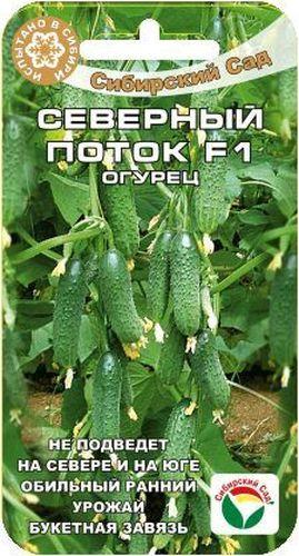 Семена Сибирский сад Огурец. Северный поток F1BP-00000315Не подведет на Севере и на Юге. Обильный ранний урожай, букетная завязь. Раннеспелый самоопыляемый гибрид, способный хорошо приспосабливаться к сложным климатическим условиям. Растение среднерослое, длина главного стебля 2-2,5м. Огурчики красивые, зеленые, с частой бугорчатостью и белыми шипами. Длина плодов 10-12см, масса 40-45гр, вкусны в салате и в засоле.