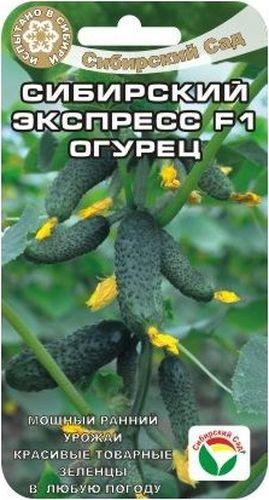 Семена Сибирский сад Огурец. Сибирский экспрессBP-00000318Мощный ранний урожай, красивые товарные зеленцы в любую погоду. Способен обильно и дружно отдать большую часть урожая в первые недели плодоношения. Растение среднерослое, удобно для выращивания в остекленных и пленочных теплицах. Зеленцы длиной 10-12см, массой 80-100гр. отличных вкусовых качеств, универсального использования.