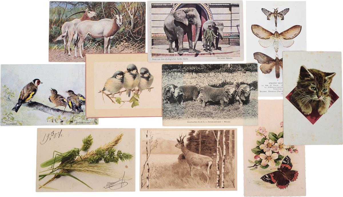 Животные. Комплект из 10 открыток