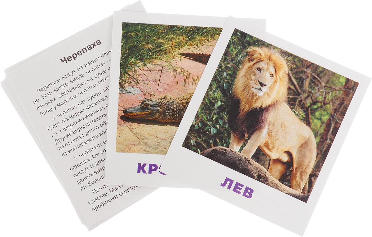 Айрис-пресс IQ-малыш Обучающие карточки Животные жарких стран