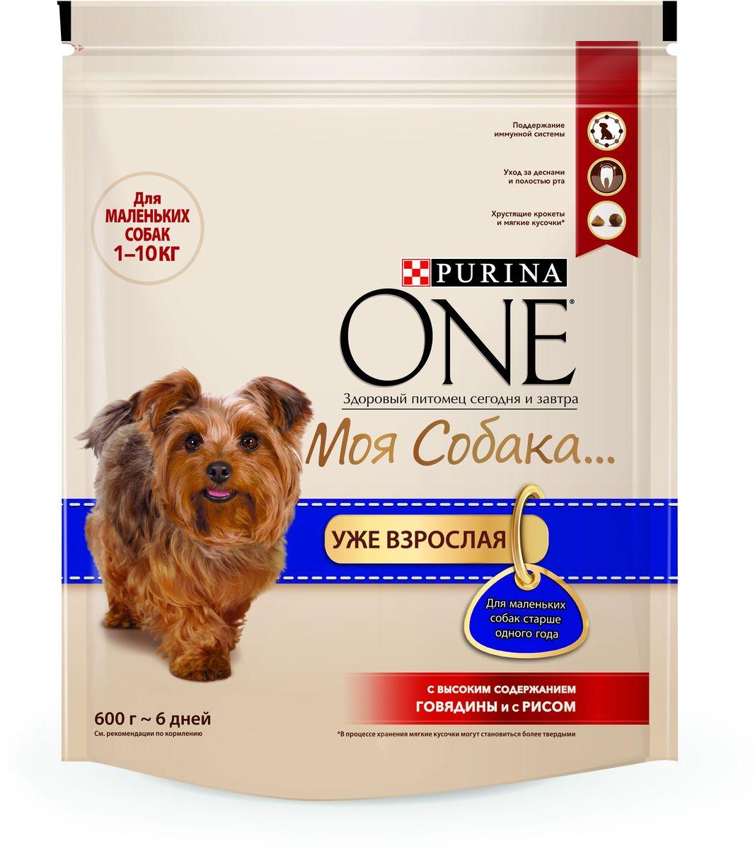 Корм сухой Purina One Моя Собака…Уже взрослая, с говядиной и рисом, 600 г65581Вкусное сочетание хрустящих крокетов и мягких кусочков с высоким содержанием говядины, отличается высоким уровнем антиоксидантов для поддержания крепкой иммунной системы и необходимыми питательными веществами для ухода за полостью рта. Начните кормить вашего любимца кормом PURINA ONE® Моя Собака...и оцените видимый результат улучшения его здоровья. МЕ/кг: витамин А: 30 000; витамин D3:1 000; витамин E: 600. Мг/кг: витамин С: 140; железо: 69; йод: 1,7; медь: 10; марганец: 32; цинк: 130; селен: 0,11. Белок: 27,0%, Жир: 17,0%, Сырая зола: 7,0%, Сырая клетчатка: 1,5%.