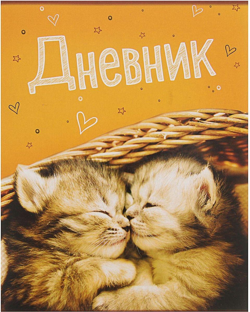 Calligrata Дневник школьный Котята