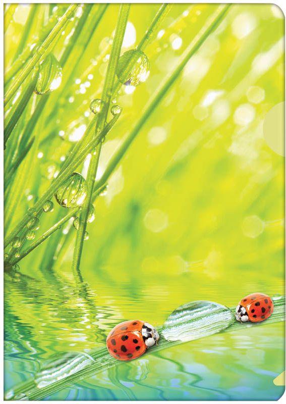 Berlingo Папка-уголок LadybirdAGp_04032Пластиковая папка -уголок с ярким рисунком. Боковой вырез предназначен для удобного извлечения листов.
