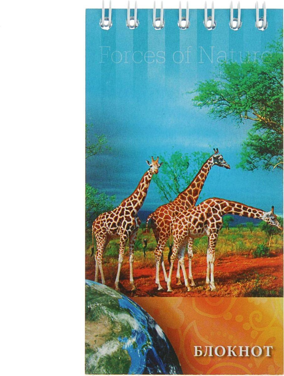 Апплика Блокнот Жирафы 60 листов