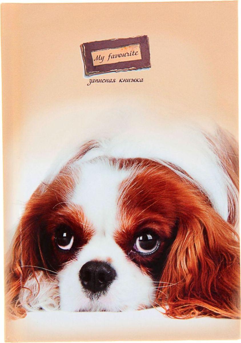 Проф-Пресс Записная книжка Пушистый щенок 48 листов1211535Записная книжка — компактное и практичное полиграфическое изделие, предназначенное для разного рода записей и заметок. Такой предмет прекрасно подойдёт для фиксации повседневных дел. Это канцелярское изделие отличается красочным оформлением и придётся по душе как взрослому, так и ребёнку. Записная книжка твёрдая обложка А6, 48 листов Пушистый щенок, глянцевая ламинация обладает всеми необходимыми характеристиками, чтобы стать вашим полноценным помощником на каждый день.