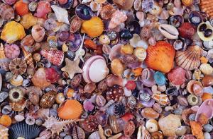 Настольная игра Морские ракушки. Пазл (1000 элементов)