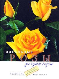 Идеальные розы за один сезон. Людмила Иванова