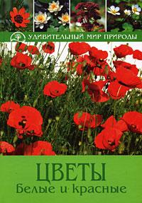 Цветы белые и красные