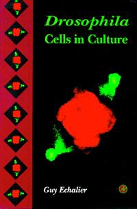 Drosophila Cells in Culture