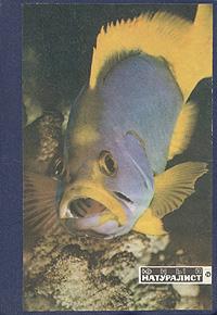 Юный натуралист. Годовой комплект за 1971 год