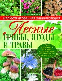 Татьяна Ильина. Лесные грибы, ягоды и травы