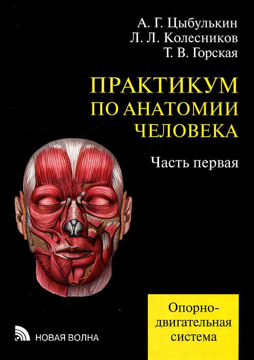 Михайлов С.С. Анатомия Человека
