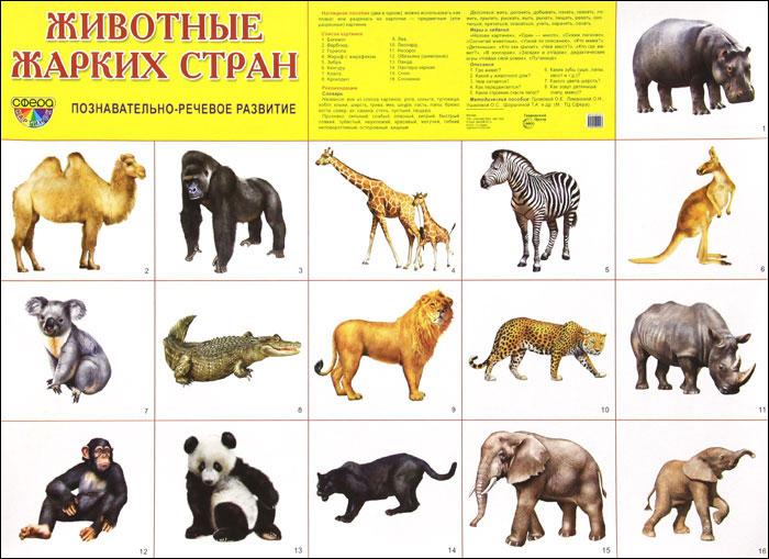 Животные жарких стран. Плакат