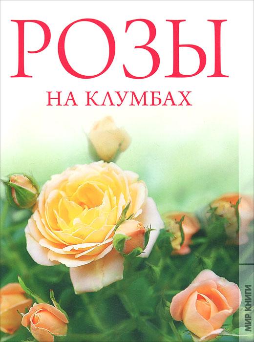 Розы на клумбах
