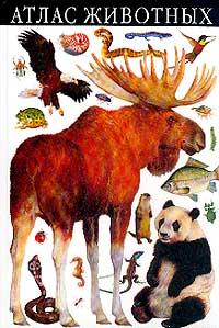 Атлас животных12296407Раскрой эту книгу - и ты прочитаешь о моллюсках, рыбах, птицах, змеях, слонах и многих других животных, а также об их повадках, особенностях, местах обитания. Ты узнаешь о любви пальмовых воров к кокосам, о жестоких нравах черных вдов, о болтливых афалинах, о сипухах, похожих на привидений. Атлас содержит более 1000 прекрасно выполненных иллюстраций и классификационную таблицу, которая поможет составить верное представление о месте каждого животного на эволюционной лестнице; множество любопытных сведений и научных фактов, способных заинтересовать и детей, и взрослых.