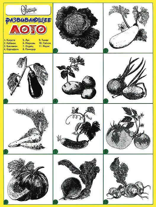 Овощи. Развивающее лото ( 978-5-86415-541-7 )