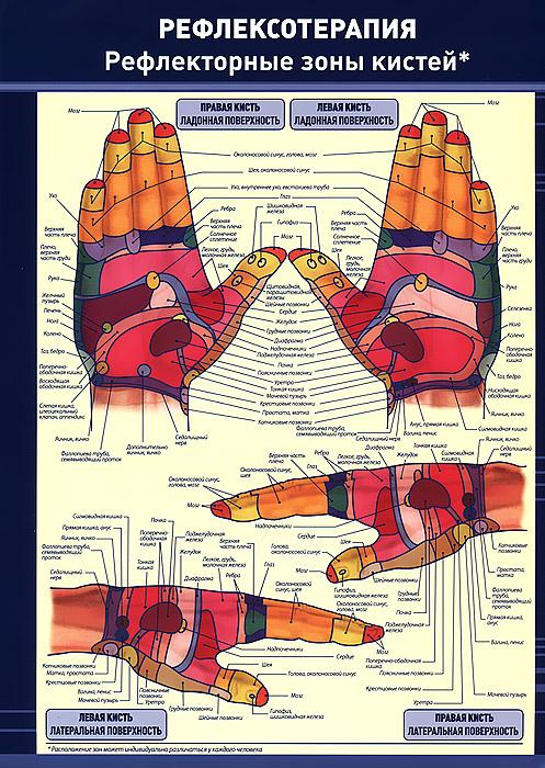 Рефлексотерапия. Рефлекторные зоны кистей. Плакат ( 978-5-94387-718-6 )