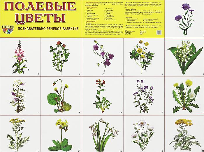 Полевые цветы. Плакат