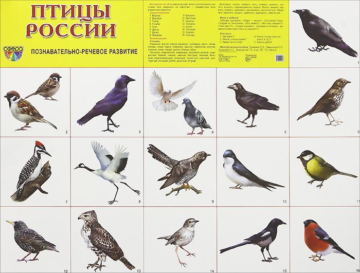 Птицы России. Плакат
