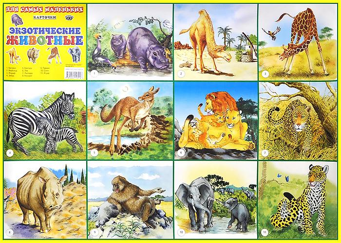 Экзотические животные. Плакат