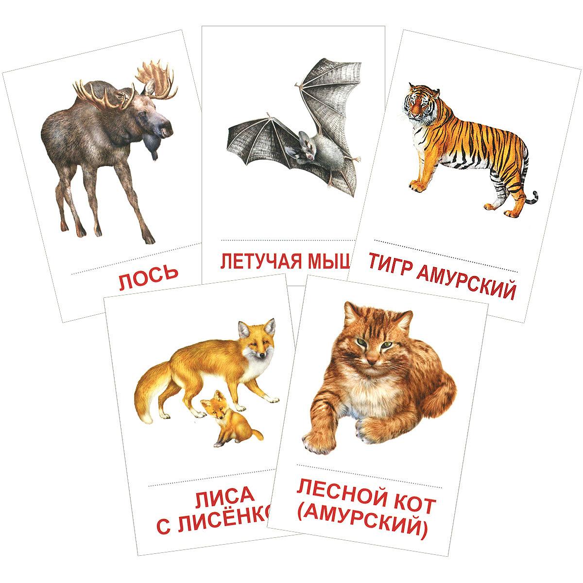 Дикие животные (набор из 16 карточек) ( 978-5-9949-0904-1 )
