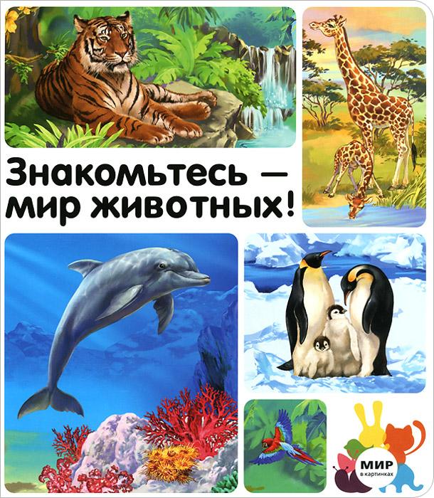 Знакомьтесь - мир животных!12296407Книга ЗНАКОМЬТЕСЬ - МИР ЖИВОТНЫХ! из серии Мир в картинках познакомит Вашего ребенка с дикими обитателями планеты Земля - животными леса, саванны, джунглей, океана и полюсов. Прекрасные иллюстрации откроют перед малышом таинственный мир живой природы, а благодаря картинкам-выноскам ребенок с легкостью запомнит названия всех диких зверей и сможет показать их на карте мира.