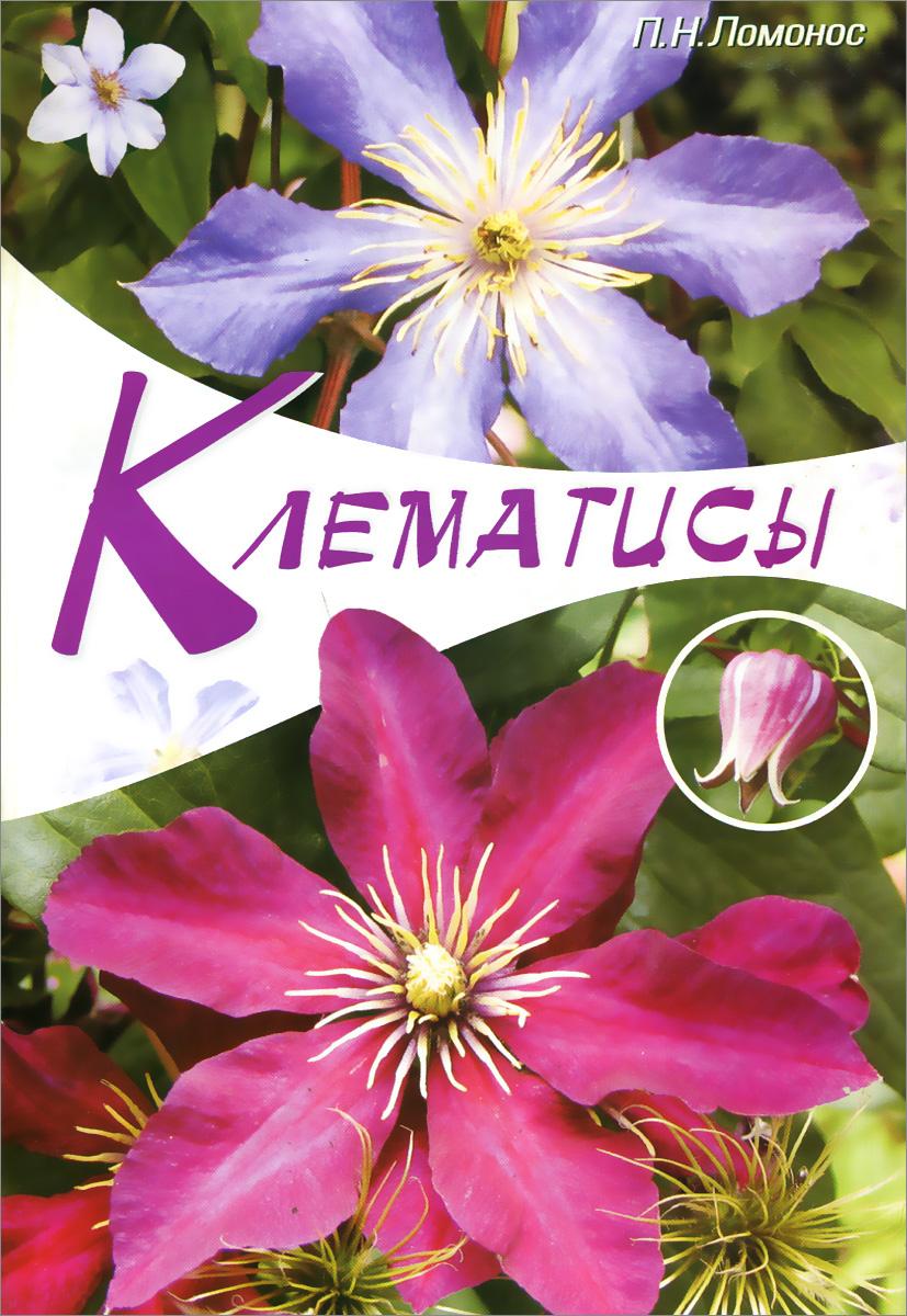 Клематисы
