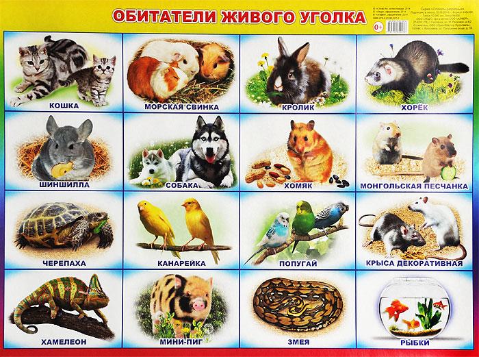 Обитатели живого уголка . Плакат ( 978-5-91282-007-6 )