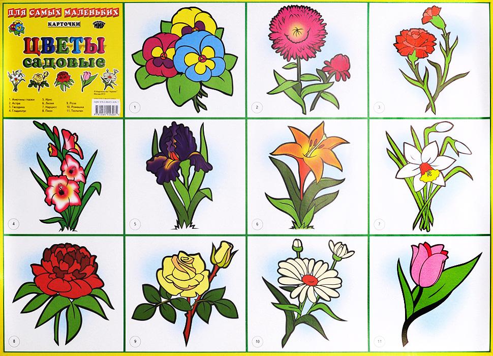 Цветы садовые. Плакат