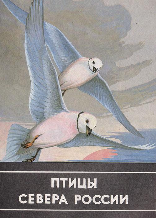 Птицы севера России